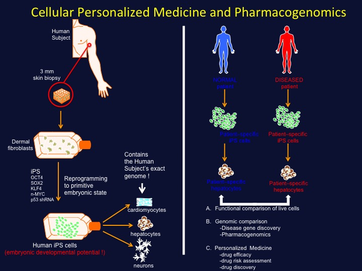 personalized medicine approaches